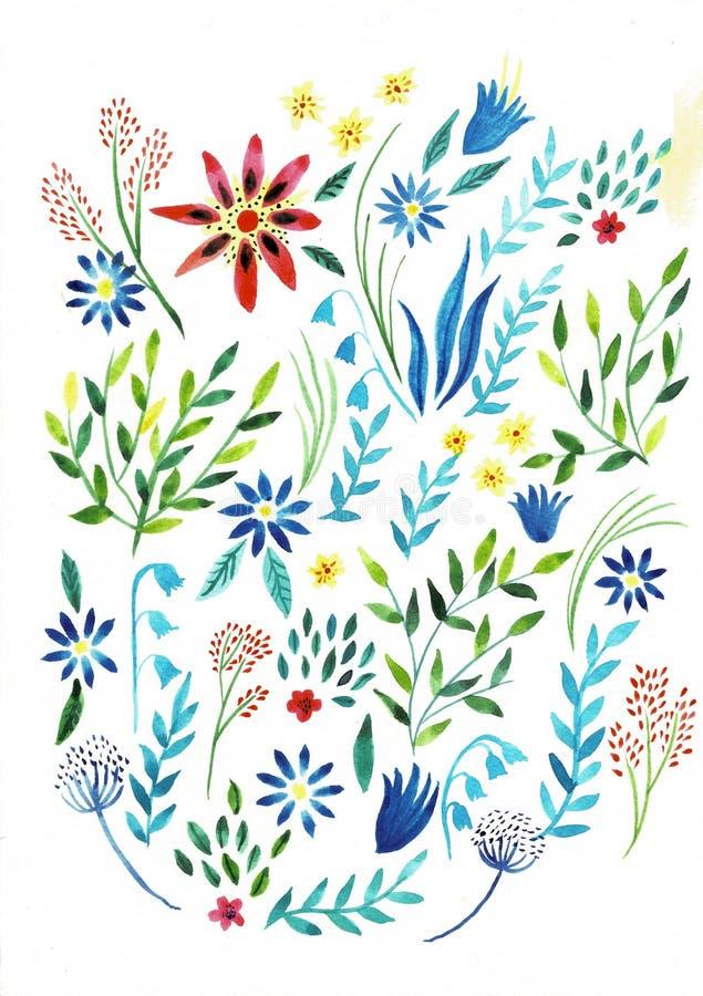 Ampu?a ustawia akwareli ilustracj? Botaniczna kolekcja dzikie i ogrodowe ro?liny Set: liście, kwiaty, gałąź, ziele ilustracja wektor