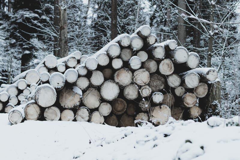 Ampuły grupa woodpile świeże cutted bele zakrywać śniegiem fotografia stock