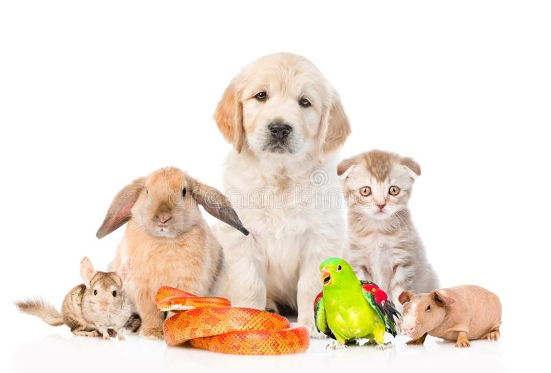 Ampuły grupa zwierzęta domowe wpólnie w frontowym widoku Odizolowywający na bielu obraz stock