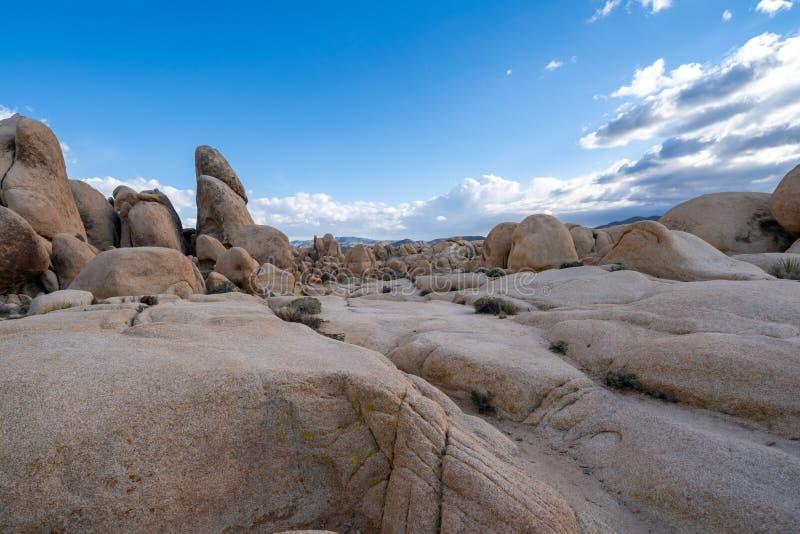 Ampuły pole głazy wzdłuż Wysklepia Rockowego ślad w Joshua drzewa parku narodowym, podczas późnego popołudnia obrazy stock