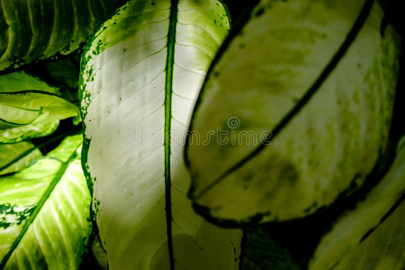 Ampuły zieleni liście z światła słonecznego jaśnieniem obraz stock