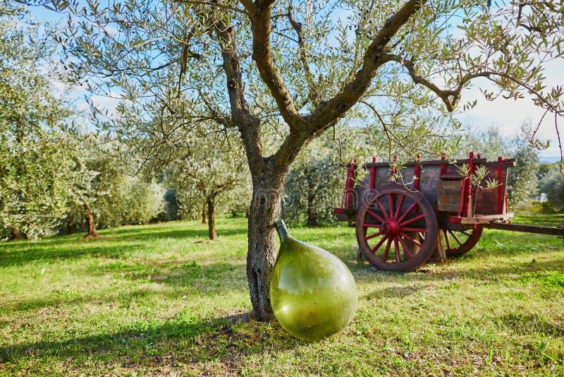 Ampuły zieleni olej lub wino butelka blisko drzewa oliwnego na Toskańskim gospodarstwie rolnym obrazy royalty free