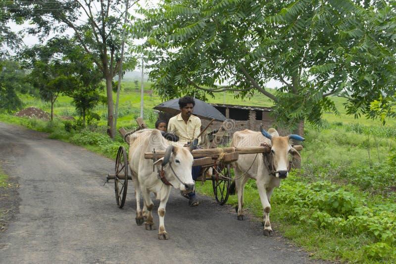 AMRAVATI MAHARASHTRA, INDIEN, Augusti 2018, vagn för bonderittoxe på vägen på den Ghuti byn, Dharni Taluka royaltyfria bilder