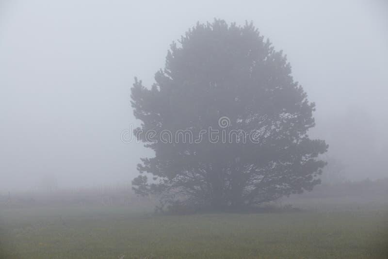 Amrum (Германия) - дерево на тумане стоковые изображения
