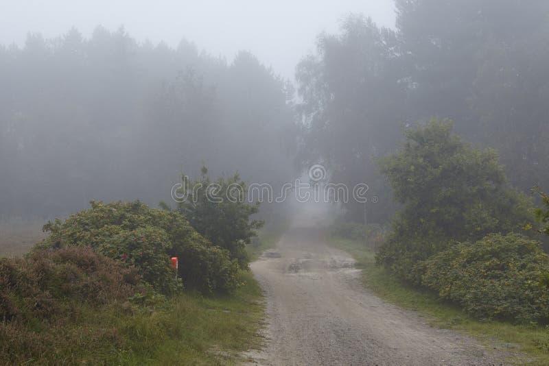 Amrum (Allemagne) - chemin au brouillard image libre de droits