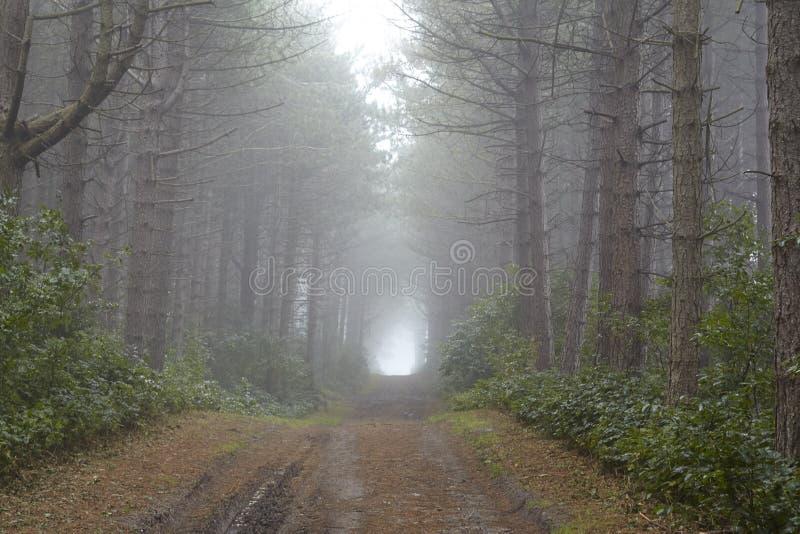 Amrum (Allemagne) - chemin forestier au brouillard image libre de droits