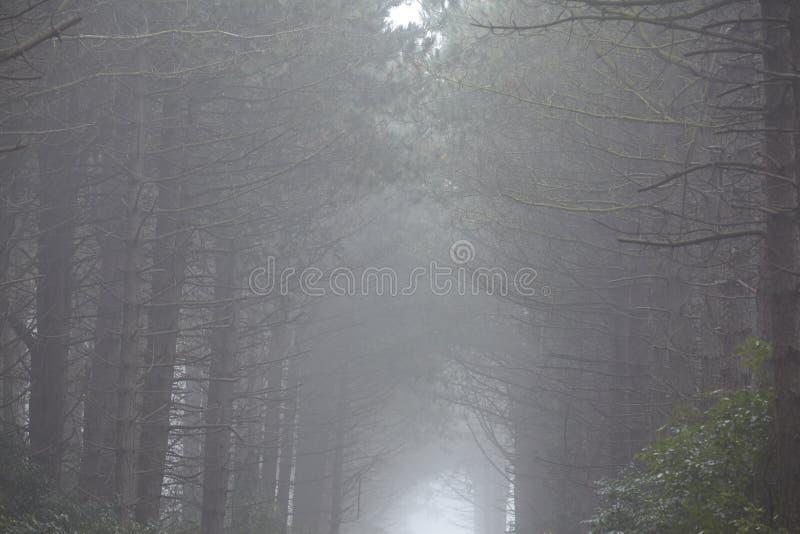 Amrum (Allemagne) - forêt au brouillard image libre de droits