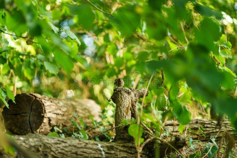 Amsel u. x28; Turdus merula& x29; , eingelassen Großbritannien stockfoto