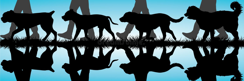 Amstaff, Presa Canario, Labrador e silhouet caucasiano do pastor ilustração stock