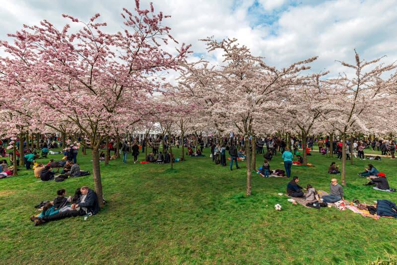 Amstelveen japanese garden picnic season royalty free stock photos