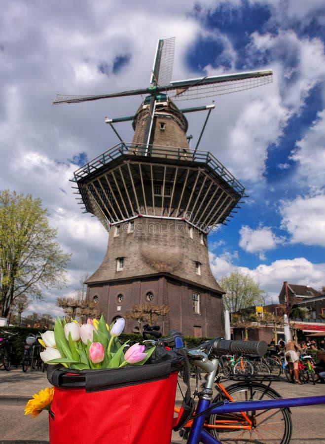 Amsterdão com a cesta de tulipas coloridas contra o moinho de vento velho na Holanda fotografia de stock