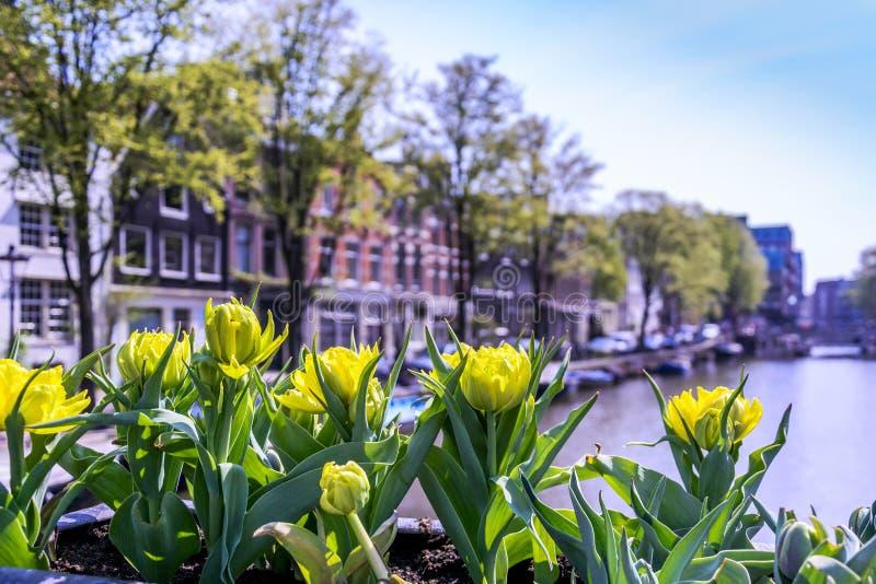 Amsterdam arkivbild