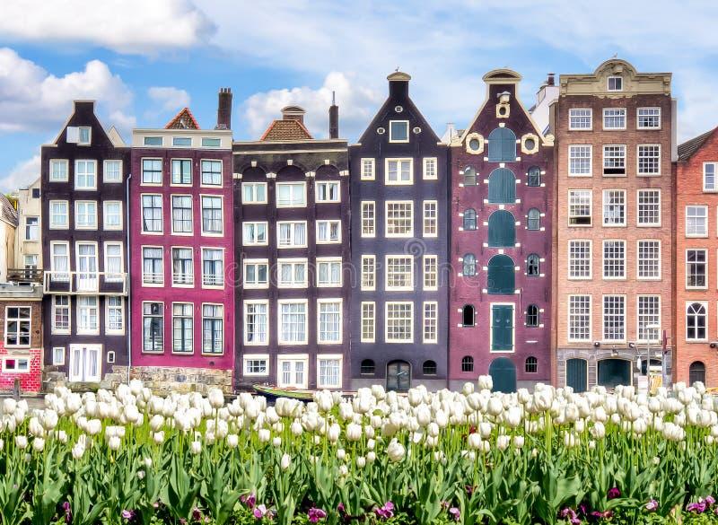 Amsterdam arkitektur på Damrak kanal- och vårtulpan, Nederländerna royaltyfria foton