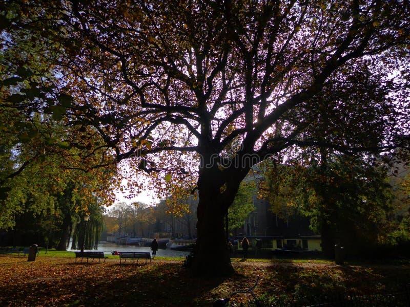 Amsterdam Autumn. Hortus royalty free stock photo