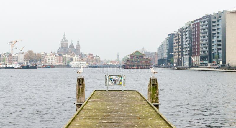 Amsterdam Netherands - Maj 2019 två fiskmåsar sitter på träpoler och ser de royaltyfri bild