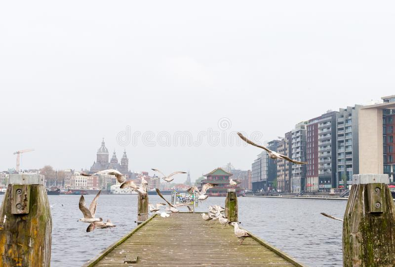 Amsterdam, Netherands - Mei 2019 Het vliegen en statuszeemeeuwen op houten platform stock afbeeldingen