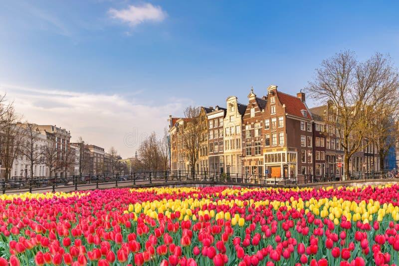 Amsterdam Olanda con fiorellino di molla immagine stock libera da diritti