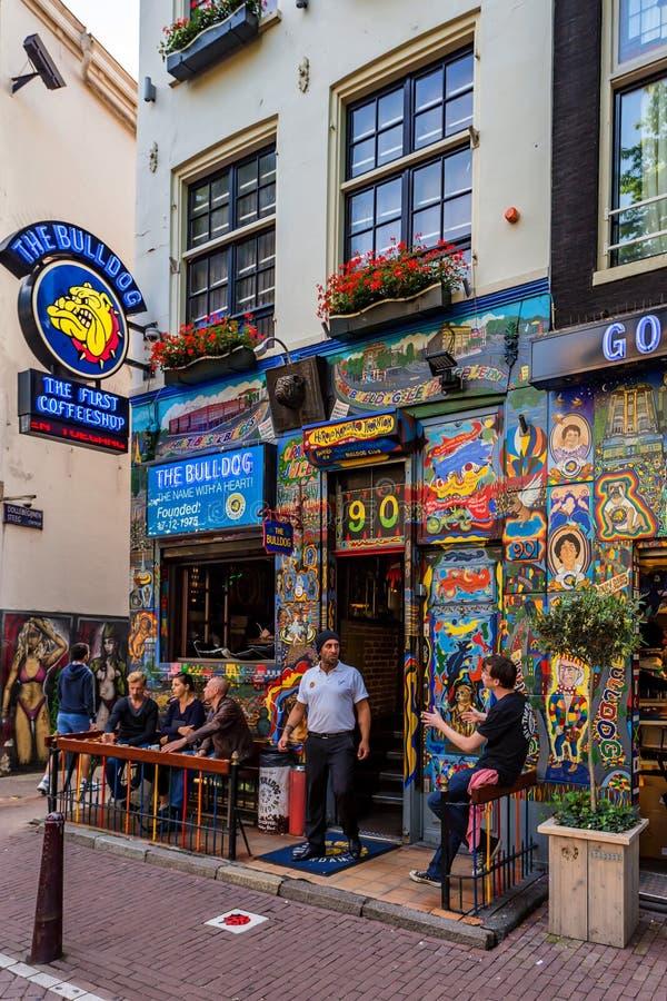 AMSTERDAM, PAESI BASSI - 10 GIUGNO 2014: Entrata del coffeeshop del bulldog di Amsterdam fotografia stock libera da diritti