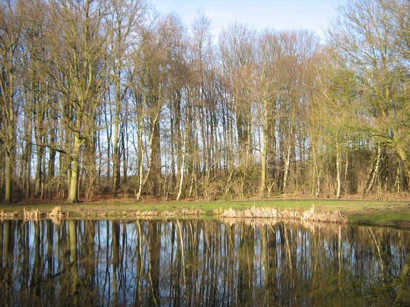 Amsterdamse Bos, de winter royalty-vrije stock foto