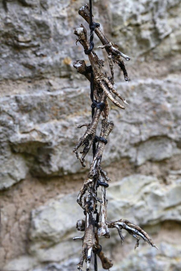 Amuleto de la pierna de pollo seca imágenes de archivo libres de regalías