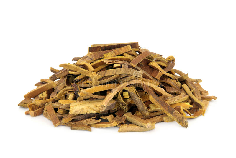 Amur Cork Tree Bark Herb royalty free stock photo