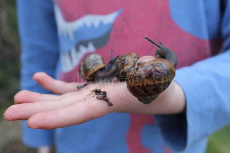 Amusement d'escargot images stock