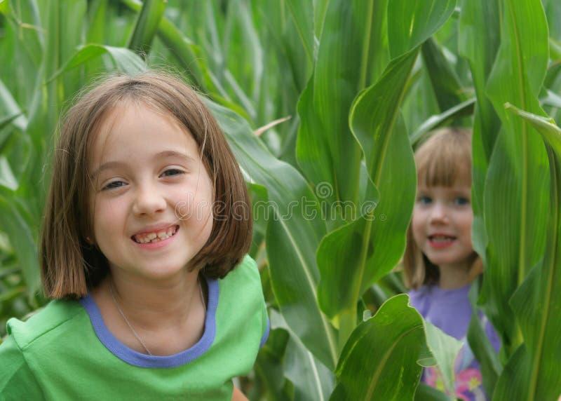 Amusement dans le domaine de maïs photos stock