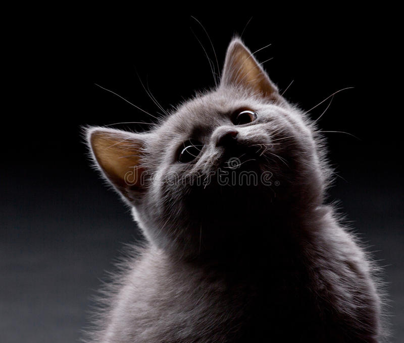 Amusing fumose little cat royalty free stock images
