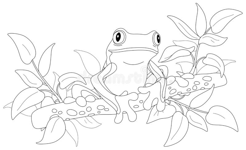 Tree Frog Coloring Stock Illustrations 45 Tree Frog Coloring Stock Illustrations Vectors Clipart Dreamstime