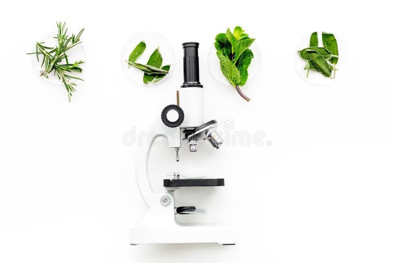 Análise de alimento Os inseticidas livram vegetais Ervas alecrins, hortelã perto do microscópio no espaço branco da cópia da opin foto de stock royalty free
