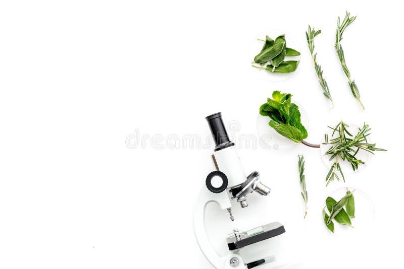 Análise de alimento Os inseticidas livram vegetais Ervas alecrins, hortelã perto do microscópio no espaço branco da cópia da opin imagens de stock