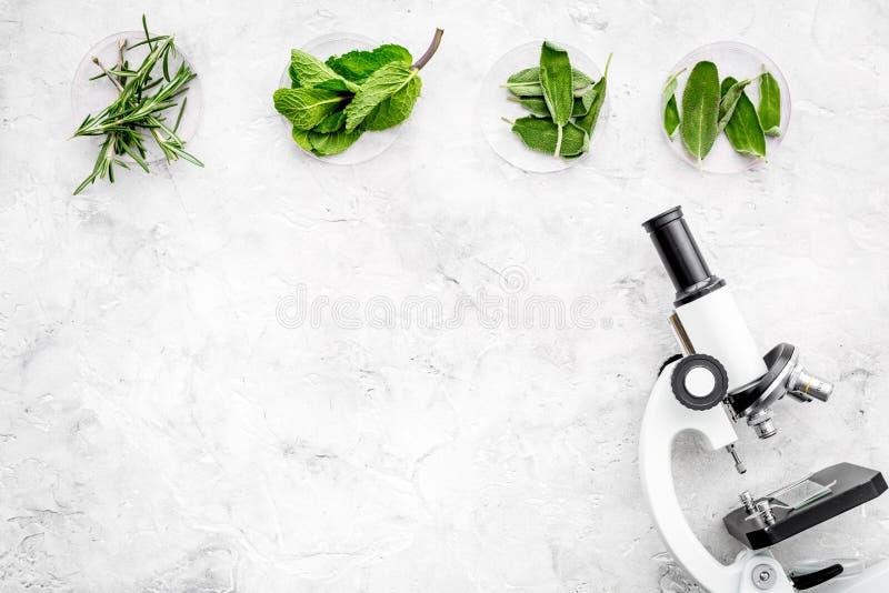 Análise de alimento Os inseticidas livram vegetais Ervas alecrins, hortelã perto do microscópio no espaço cinzento da cópia da op fotografia de stock royalty free
