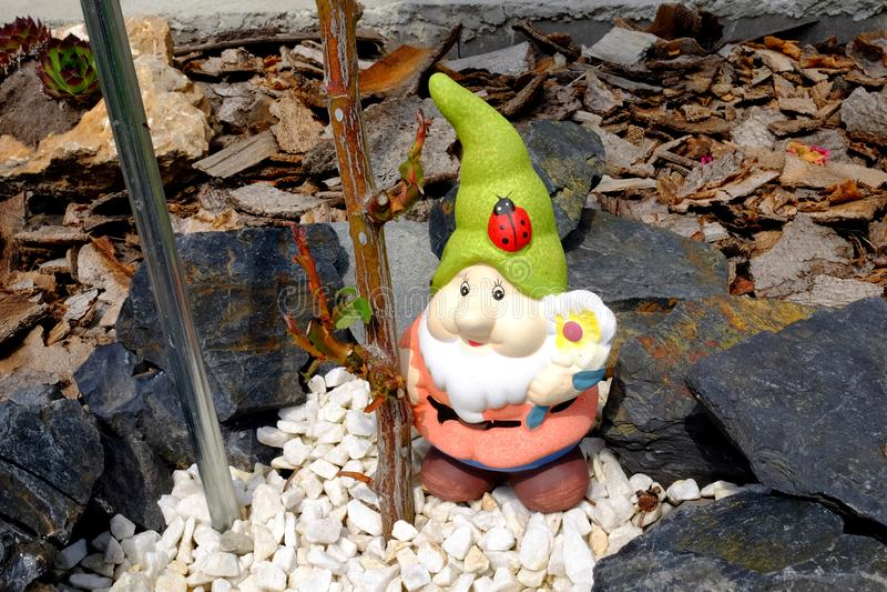 Anão pequeno bonito que está nas pedras brancas pequenas agradáveis pela haste de Rosa foto de stock royalty free