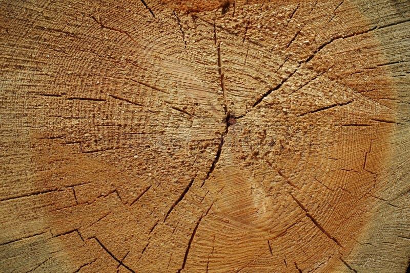 Anéis anuais no tronco do pinho imagem de stock