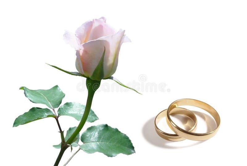 Anéis da rosa e de casamento do branco fotografia de stock