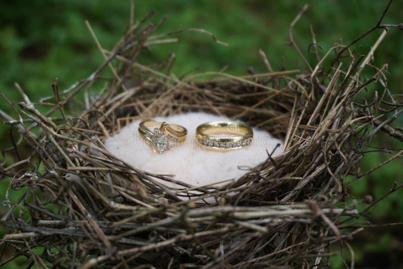 Anéis da união fotografia de stock
