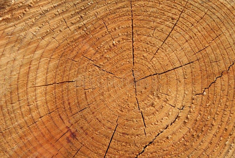 Anéis de árvore fotografia de stock royalty free