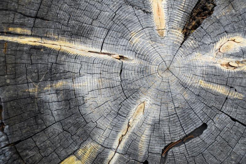 Anéis de árvore concêntricos imagem de stock