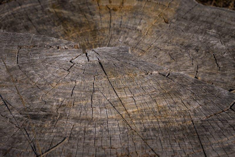 Anéis de árvore concêntricos ilustração stock