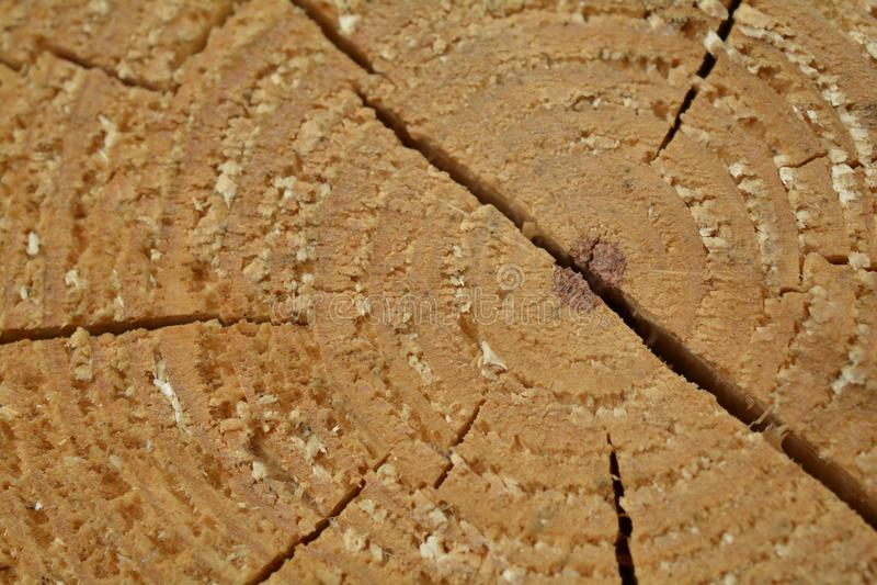 Anéis de árvore - teste padrão de madeira velho fotografia de stock royalty free
