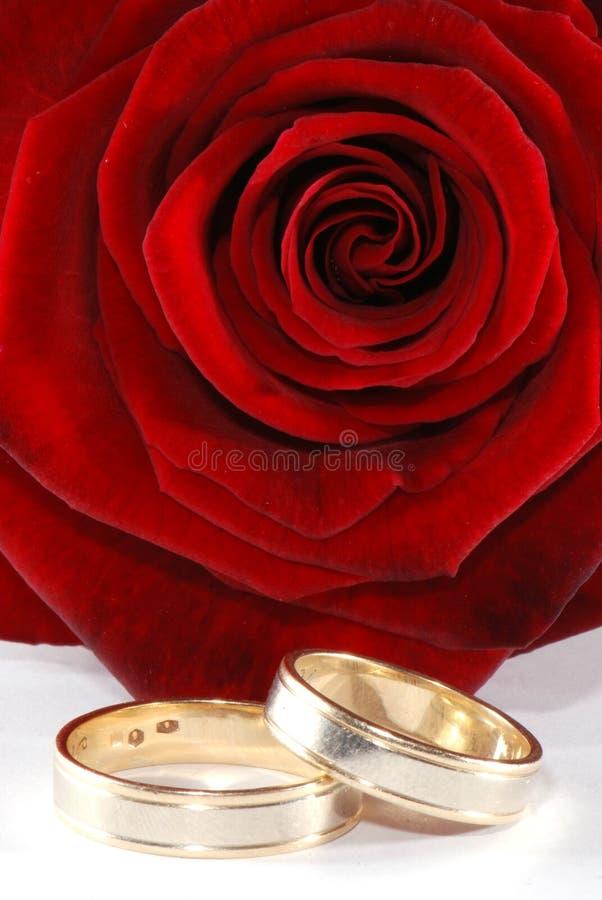 Anéis de casamento e uma rosa imagens de stock
