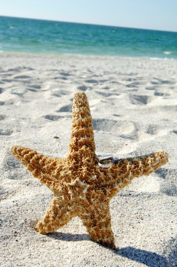 Anéis de casamento em Starfish foto de stock royalty free