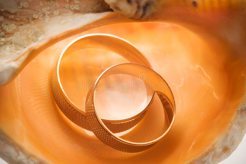 Anéis de casamento nos seashells fotografia de stock