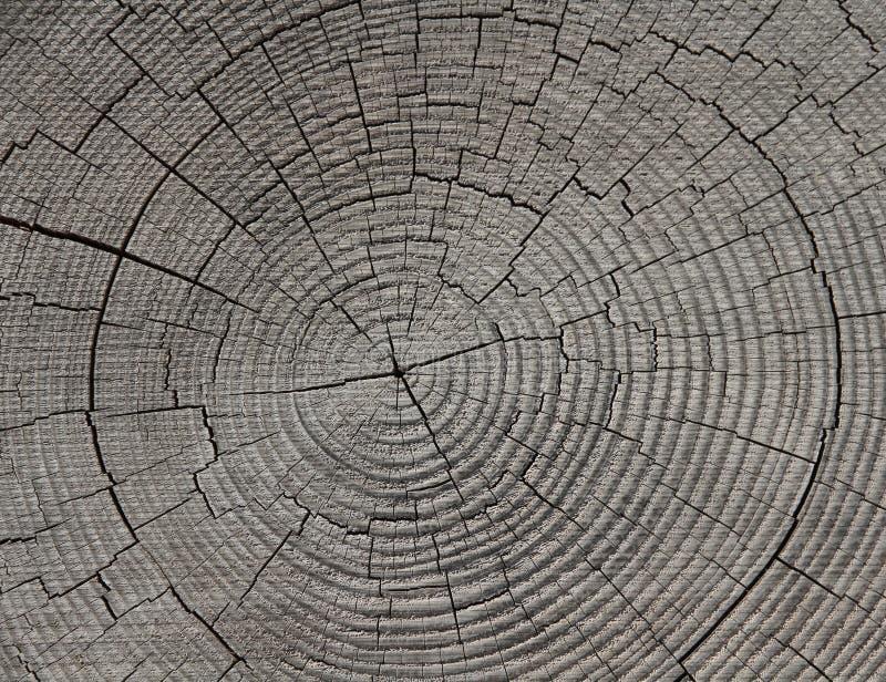 Anéis de crescimento - anéis de árvore - anéis anuais imagem de stock royalty free