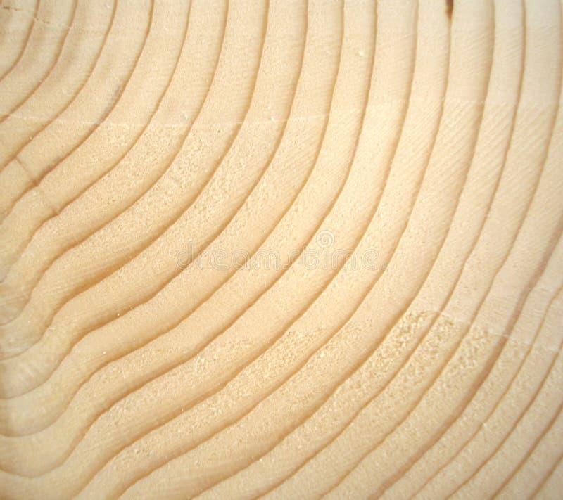Anéis de madeira foto de stock