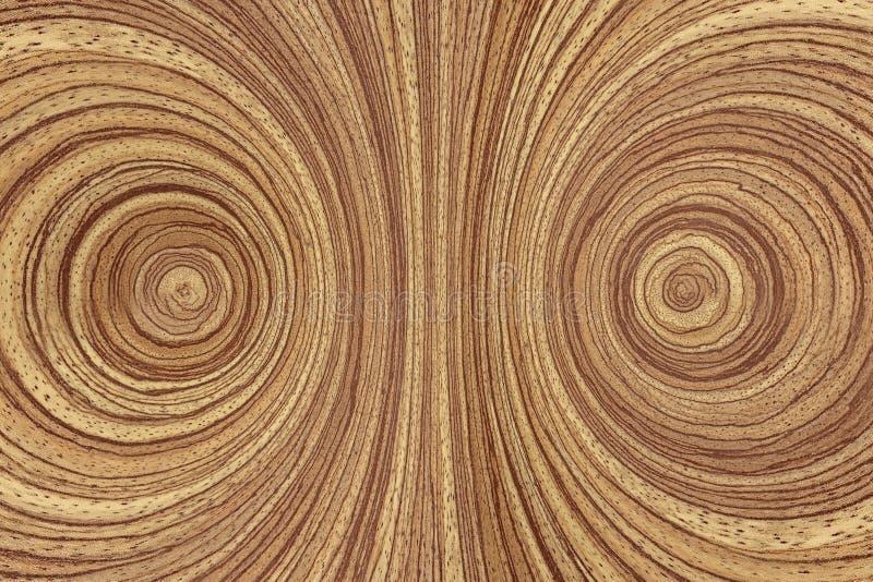 Anéis de madeira fotografia de stock