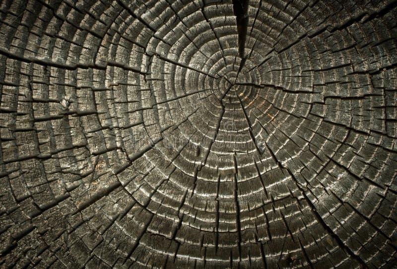 Anéis de madeira rachados velhos. fotos de stock