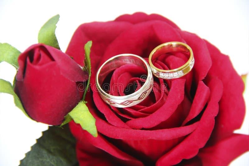 Anéis de ouro do desenhista para os noivos no seu um dia do casamento fotografia de stock