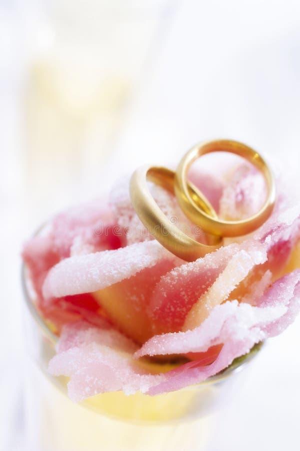 Anéis de Weddign no fim da rosa do maçapão acima imagem de stock