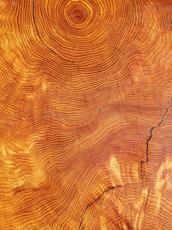 Anéis do ano do corte da árvore imagem de stock